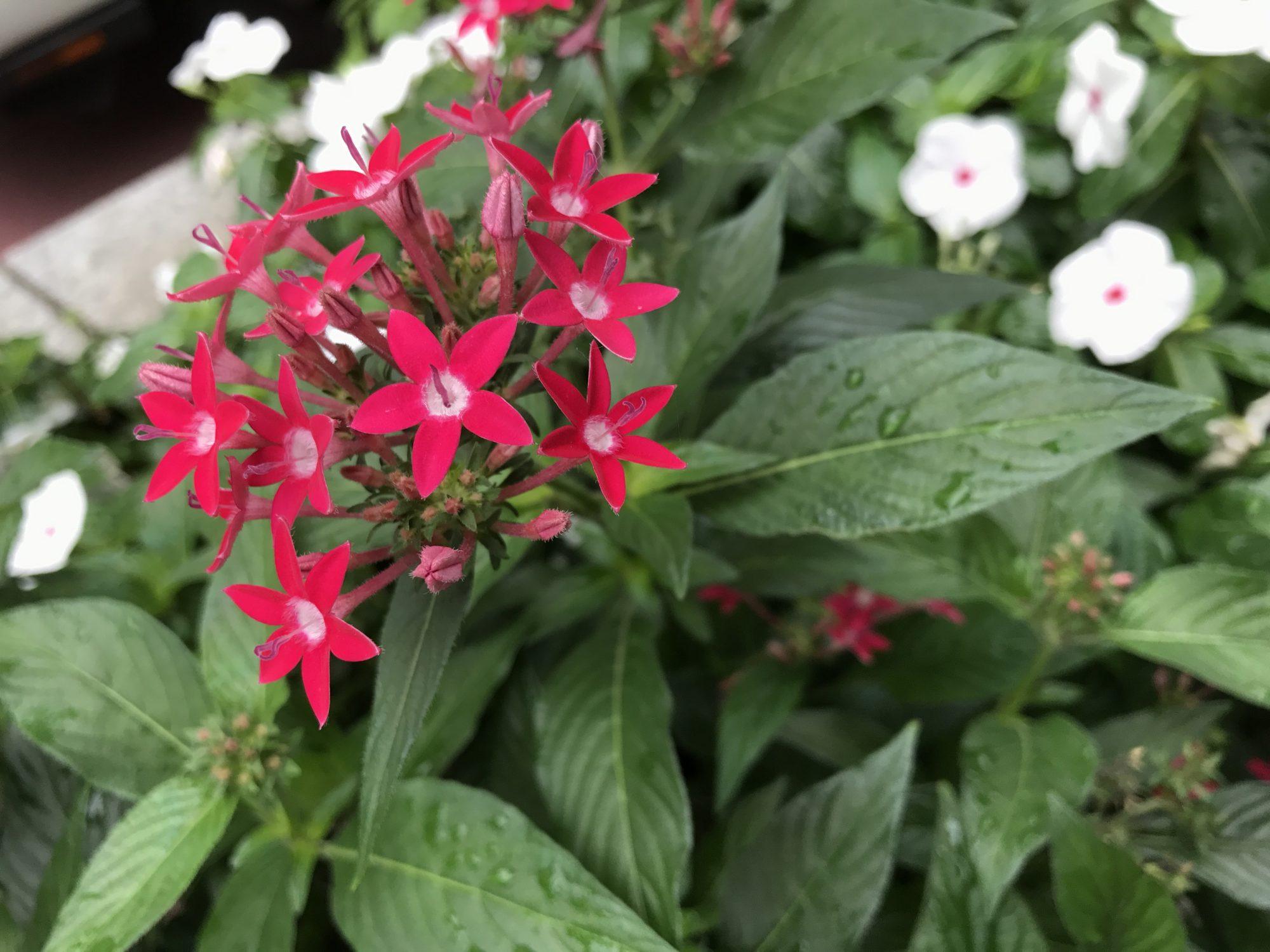 赤いお花と白いお花