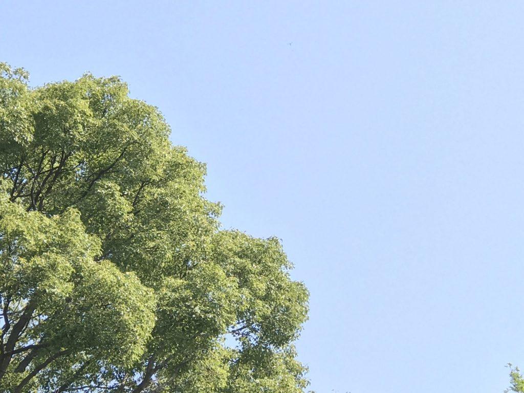 真っ青な空と青々した木