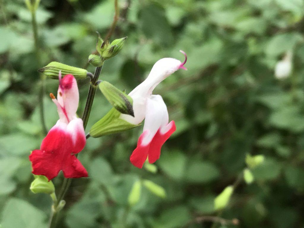 2つのお花