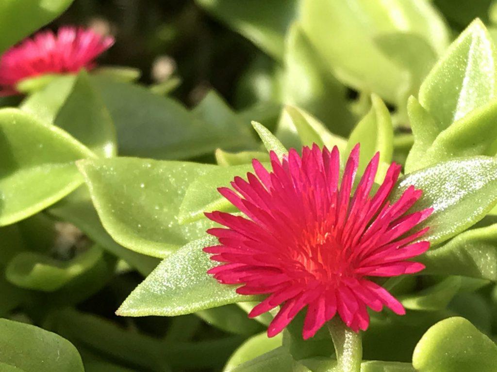 赤いきれいなお花