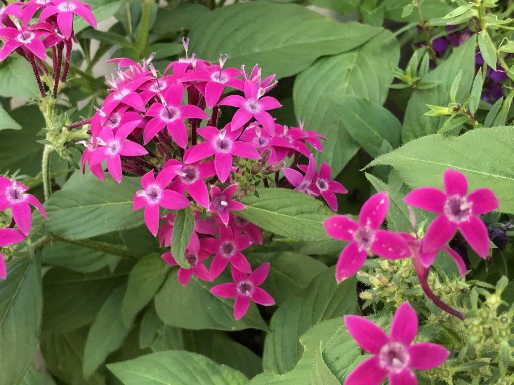 小さなピンクの花々