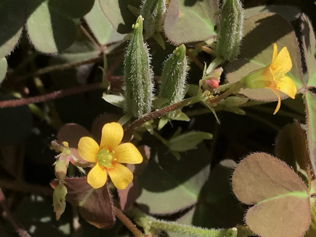 黄色いお花と赤いつぼみ