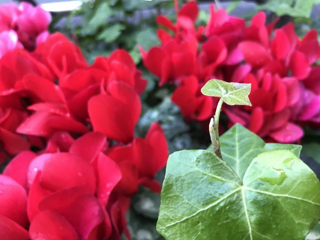 若葉と赤い花