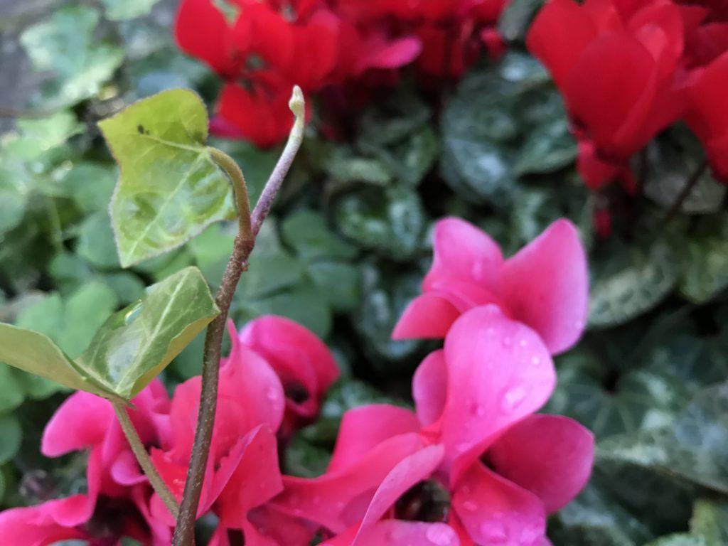 若葉とピンクのお花
