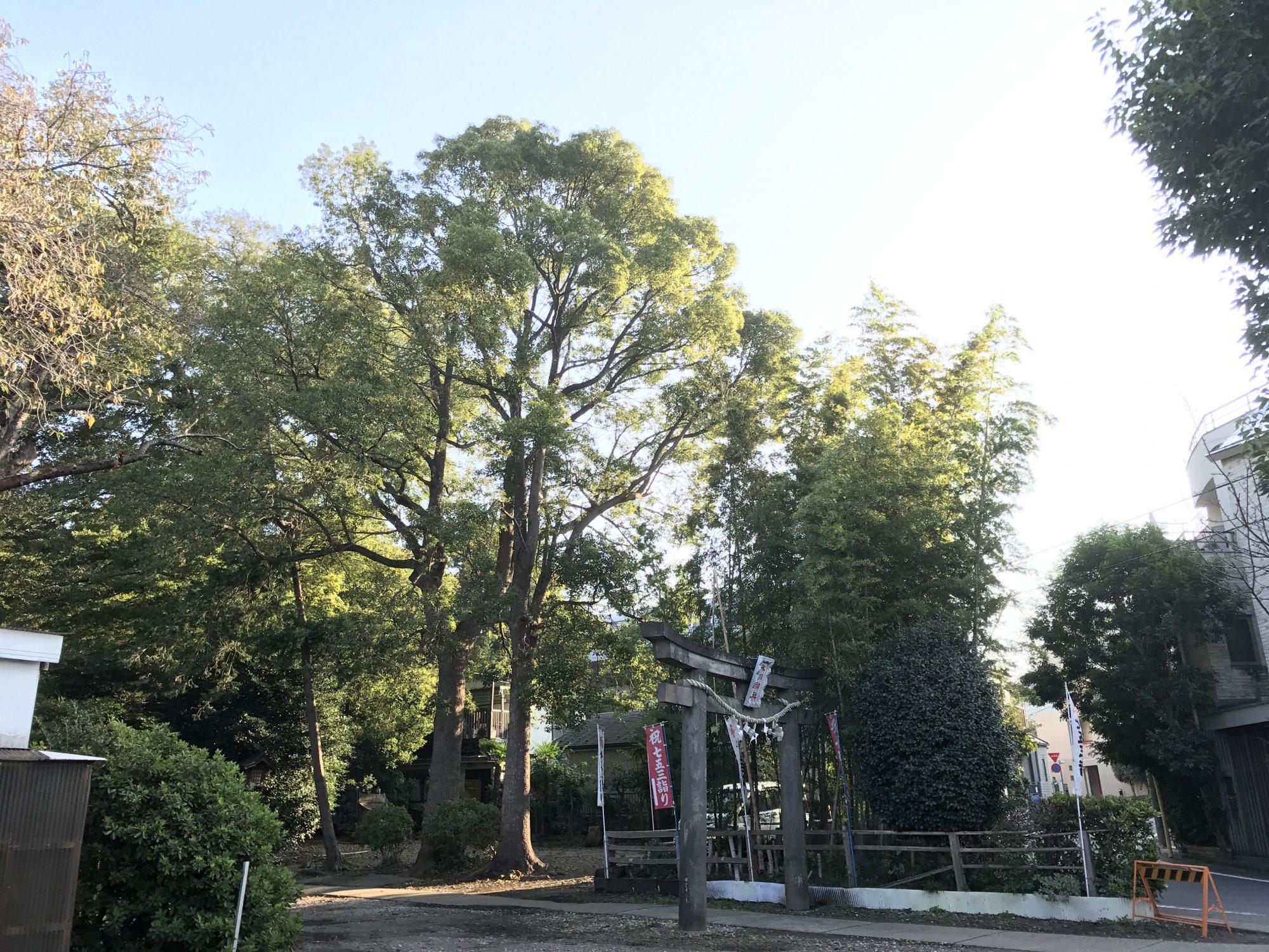 1本にみえる2本の木