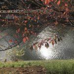 お堀と紅葉
