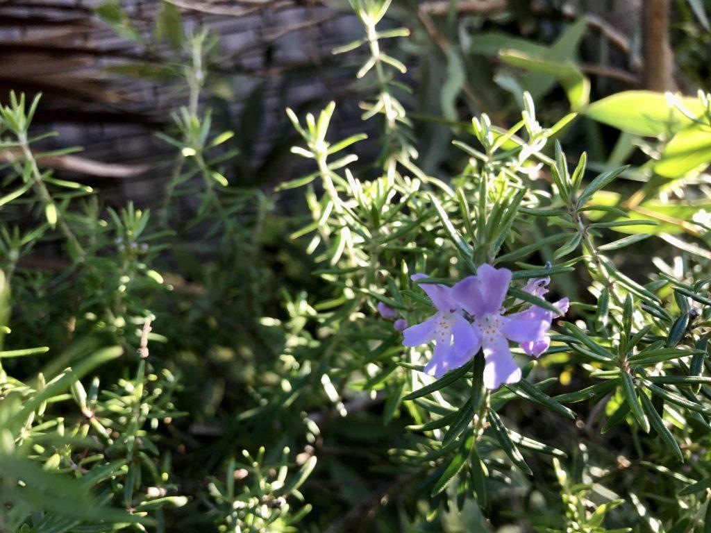 .紫の花.